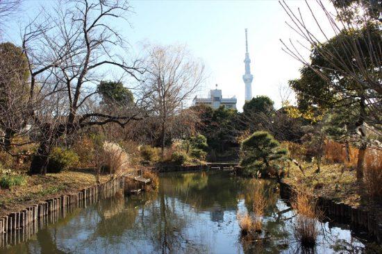 230種もの植物が見られる向島百花園は、六義園や清澄庭園などとともに「都立文化財9庭園」のひとつ