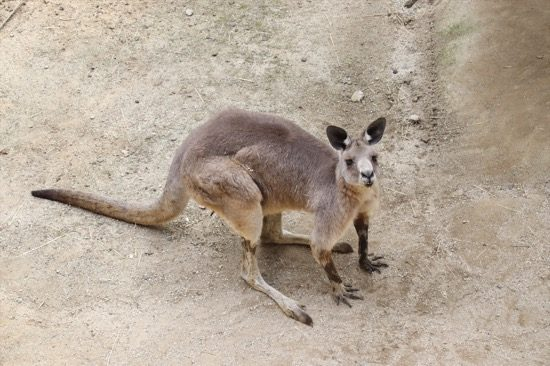 カンガルーやワラビーがいるのは、オーストラリアドーム
