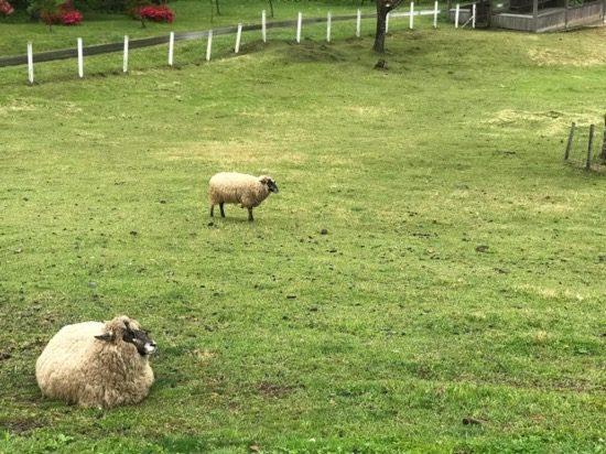 羊ファームはのんびりタイム