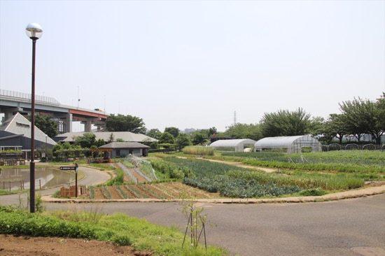 園内を進んでいくと池や田んぼ、畑が広がる。まさに「都市農業公園」といった趣
