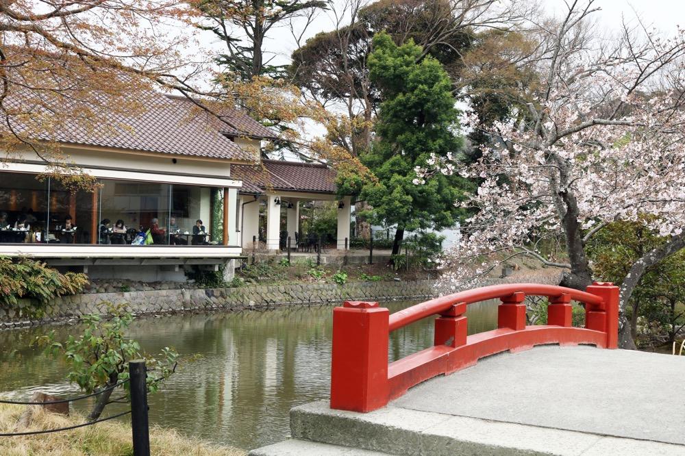 源平池。北条政子が掘らせた池で春の桜と夏の蓮花が有名