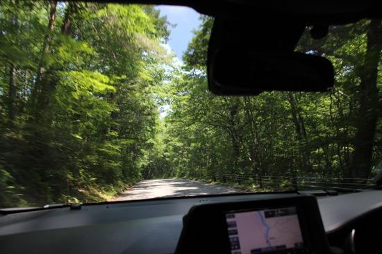 さわやかな森の中をドライブ