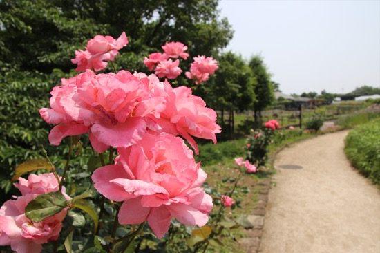 園内を歩いていると、さまざまな花に出会う