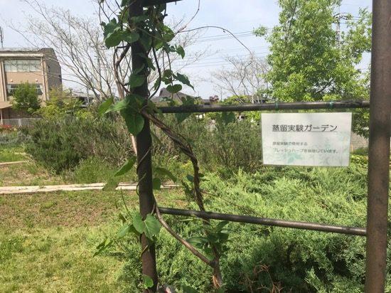 蒸留実験ガーデンのアーチ