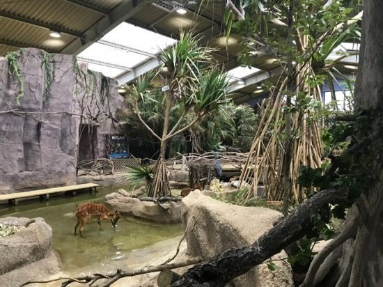 亜熱帯のジャングルに迷い込んだよう