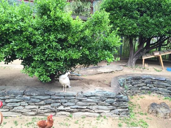併設された和歌山公園動物園はなんと入場料無料!突然変異で生まれたという「真っ白いクジャク」がいる