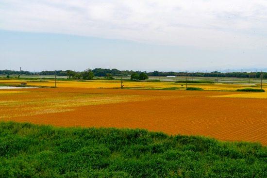 河川敷にはのどかな田園風景が広がる
