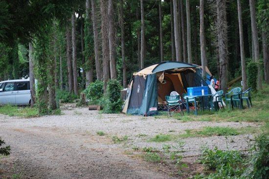 林の中でキャンプを楽しむこともできます。