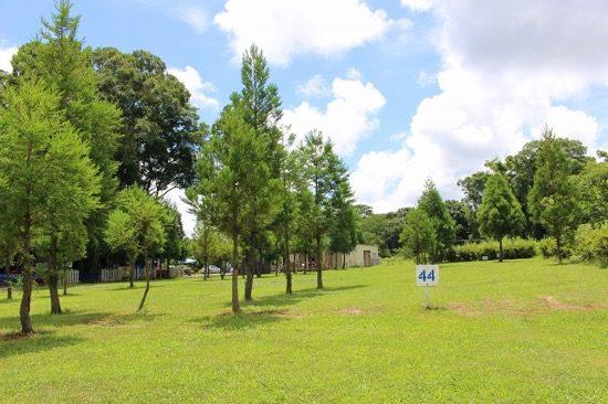 青空と天然芝生がとてもきれい