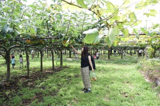 7,000㎡の果樹園にはいろいろな果物が栽培されている