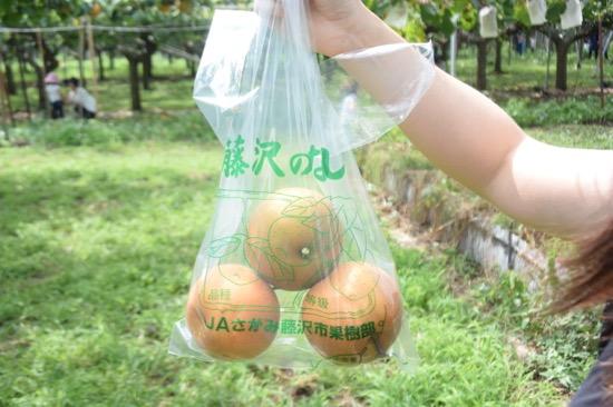 梨は袋に入れよう。採った分が買い取りになる