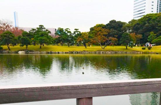 外の席からは潮入の池を眺められる